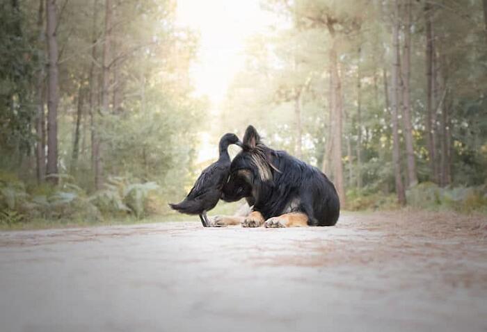 Amicizia Tra Cane e Anatra