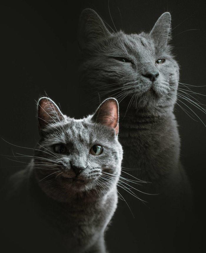 Ecco che succede quando un fotografo fa da babysitter ad un gatto