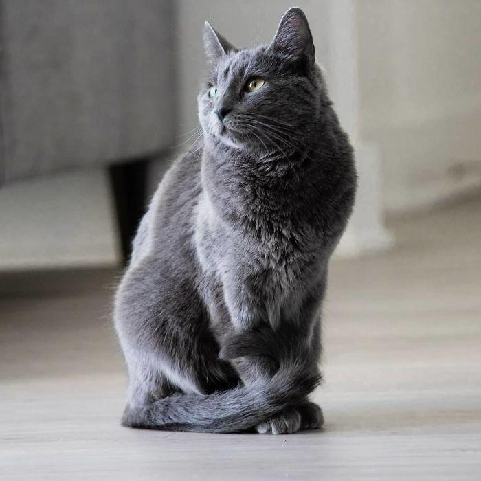 Servizio fotografico di Josell Mariano al gatto Jade