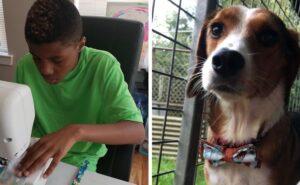 A 13 anni taglia e cuce papillon per cani e gatti abbandonati e li aiuta a trovare una famiglia