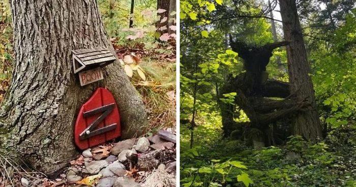 72 tra le cose più interessanti che le persone hanno trovato nei boschi