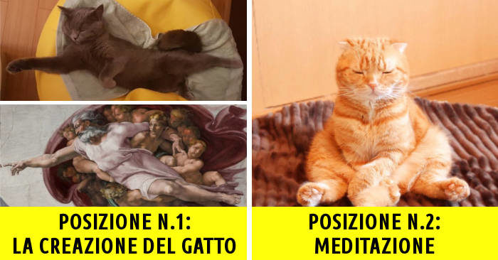 19 gatti che dormono dimostrano che puoi sempre contare su di loro per un sorriso