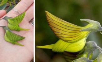 Questa strana pianta hai dei fiori con petali a forma di colibrì