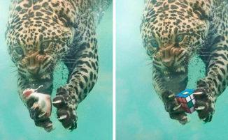Si sfidano a colpi di Photoshop su reddit: 40 immagini tra le più divertenti e creative