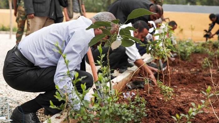 L'Etiopia pianta 350 milioni di alberi in un giorno per salvare il Pianeta e batte tutti i record