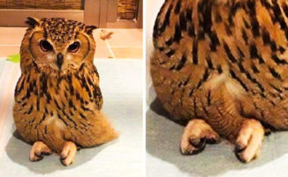 19 foto che mostrano gli animali da un'altra prospettiva