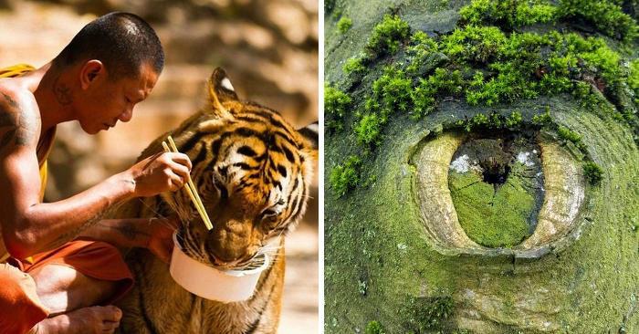 31 foto affascinanti mostrano quanto è meraviglioso il mondo