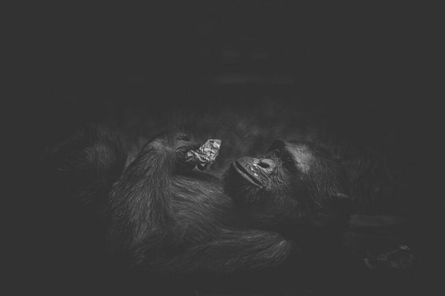 Foto Animali Zoo Bangladesh Shafiqul Islam
