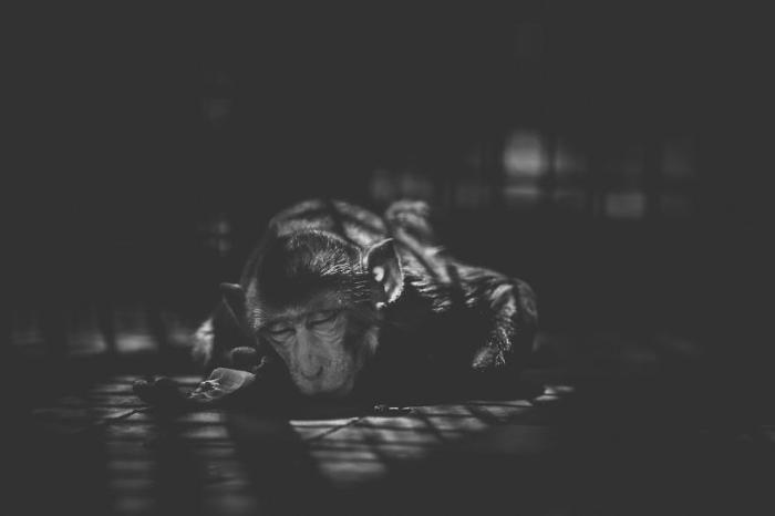 Artista cattura la triste realtà dello zoo di Mirpur in Bangladesh