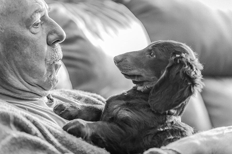Le più belle foto di cani del 2019 vincitrici del Kennel Club's Dog Photographer of the Year