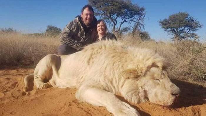 Marito e moglie si baciano davanti al leone che hanno appena ucciso e postano le foto su Facebook
