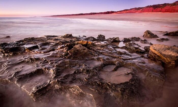 Orme più grandi dinosauri mondo Australia