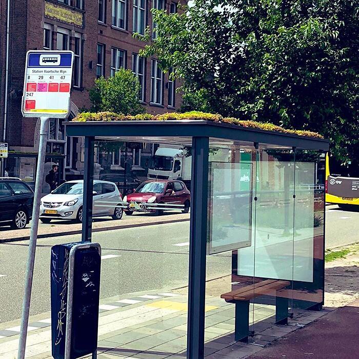 Paesi Bassi Trasformano Fermate Autobus In Isole Verdi Per Api