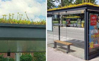 Nei Paesi Bassi trasformano le fermate dell'autobus in piccole oasi verdi per le api