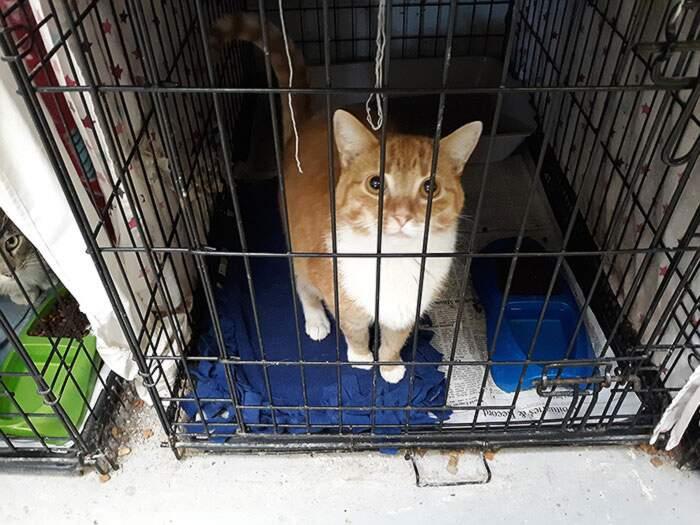 Ora gli automobilisti possono pagare le multe con cibo per gatti abbandonati, succede in USA