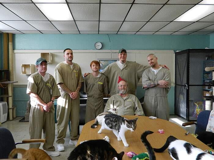 Questa prigione accoglie gatti abbandonati e stanno trasformando i detenuti