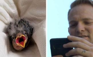 Troppo ubriaco per guidare, uomo salva un uccellino pagando un taxi per portarlo dal veterinario