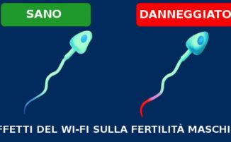 Il Wi-Fi riduce la fertilità maschile danneggiando gli spermatozoi, lo rivela uno studio