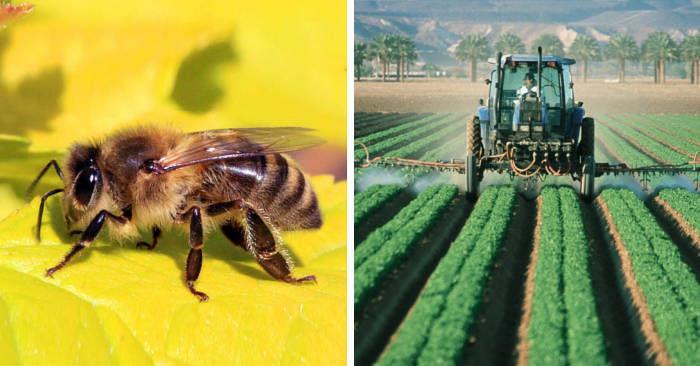 In Brasile mezzo miliardo di api sterminate da un pesticida vietato nel resto del mondo