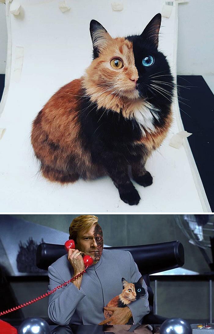 Battaglia Utenti Reddit Photoshop
