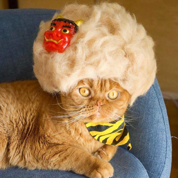 Questi gatti hanno un armadio pieno di cappelli fatti con il loro pelo caduto