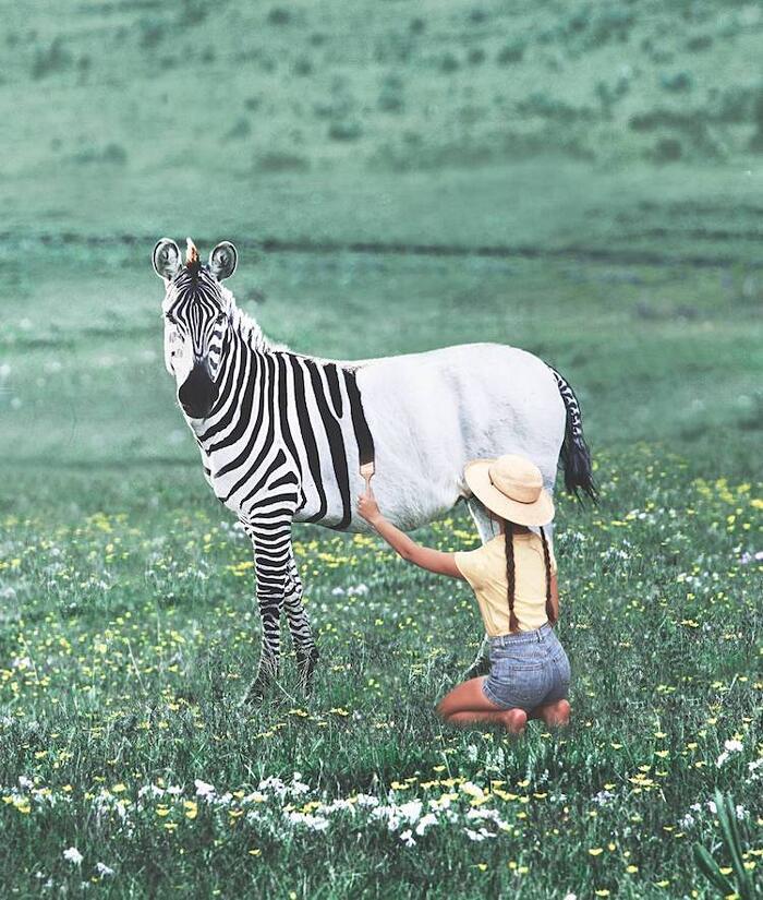 Foto Manipolazioni Surreali Animali Ronald Ong
