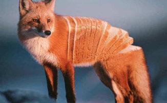 Foto surreali combinano abilmente animali e cibo