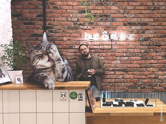 Elaborazioni digitali Gatti Giganti Andrey Scherbak