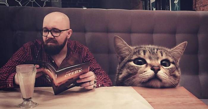Come sarebbe la Terra se i gatti fossero molto più grandi