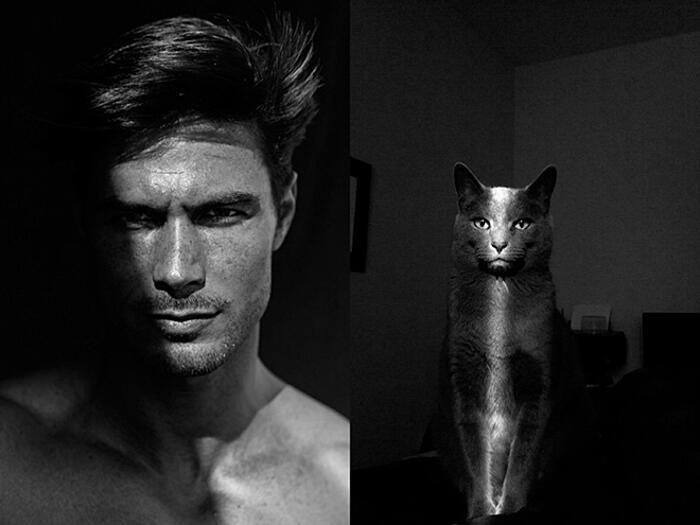 Foto divertenti gatti belli come modelli