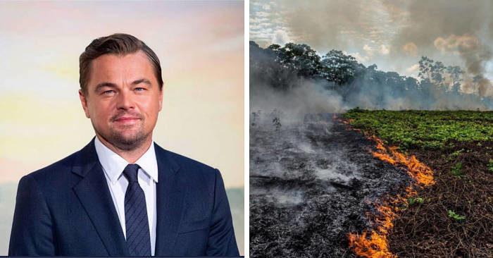 Leonardo DiCaprio crea un fondo da 5 milioni per salvare la foresta amazzonica dagli incendi
