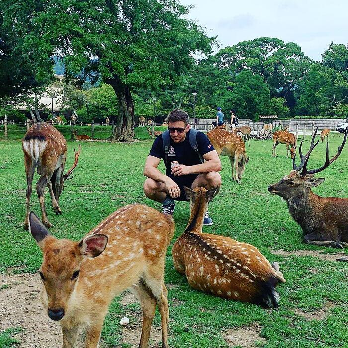 Raduno Cervi Nara Park Giappone