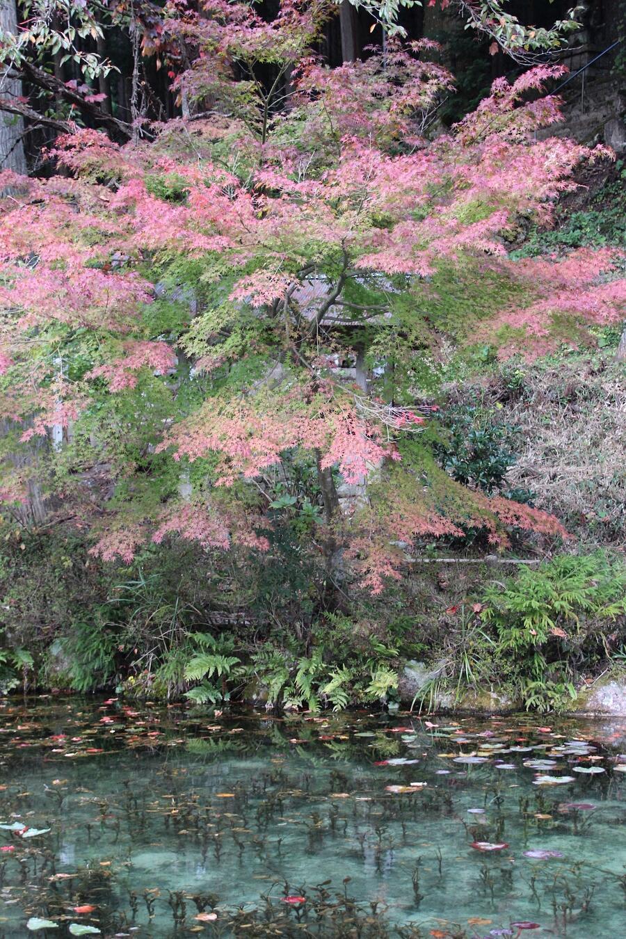 Stagno di Monet Seki Giappone