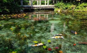 In Giappone c'è uno stagno che sembra uscito dai dipinti di Monet