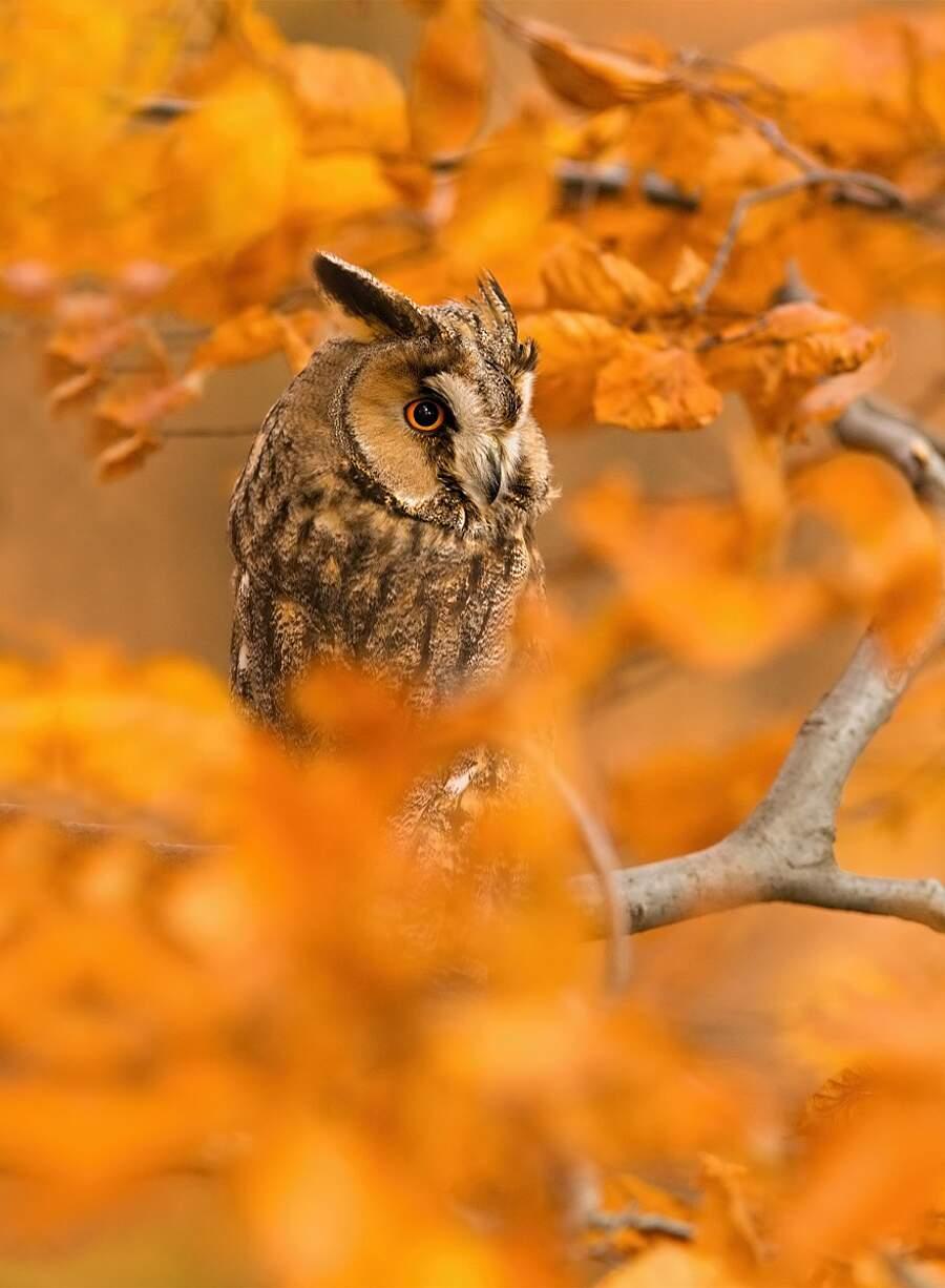 Animali autunno
