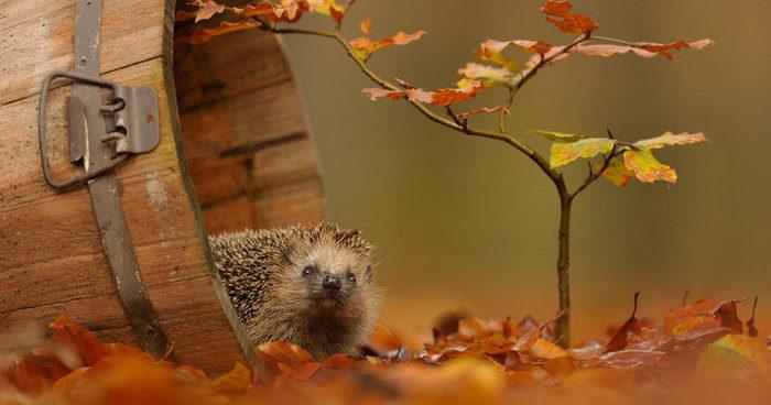90 animali che si godono la magia dell'autunno