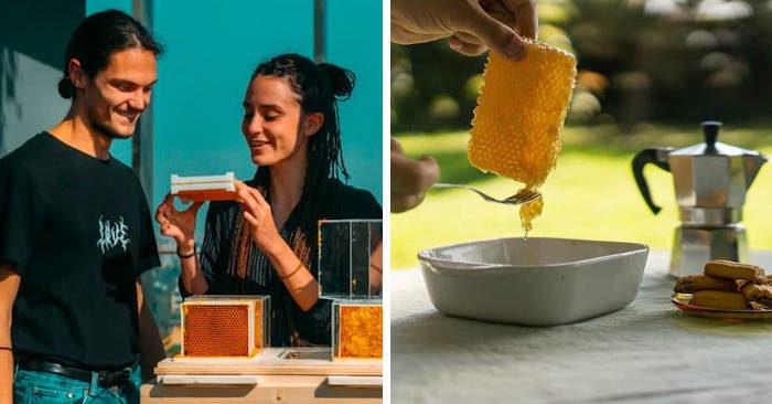 Con quest'arnia facile da usare puoi avere il miele in casa senza punture e nel rispetto delle api