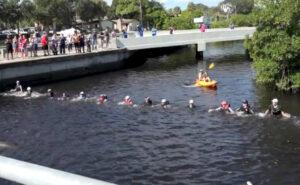 4 delfini intrappolati in un canale vengono salvati da una catena umana