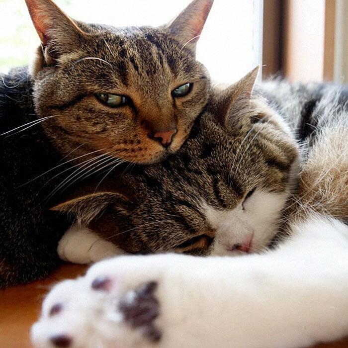 Video divertente gatti Maru e Hana