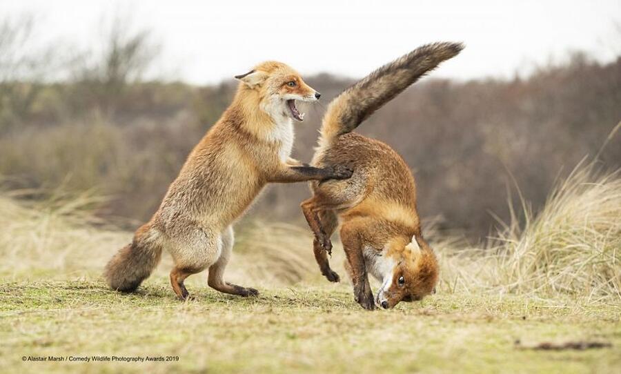 Vincitori Comedy Wildlife Photography Awards 2019