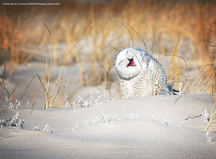 Finalisti Comedy Wildlife Photography Awards