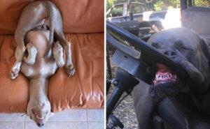 126 cani che dormono nelle posizioni più assurde che abbiate mai visto
