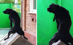 Ecco cosa fanno i nostri animali domestici quando non stiamo guardando: 22 foto divertenti