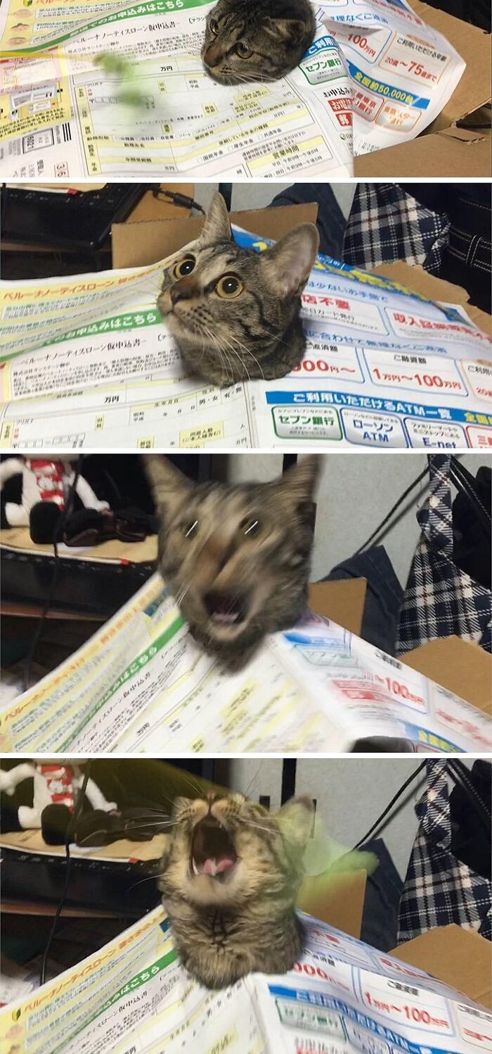 foto gatti divertenti che meritano il titolo di micio dell'anno