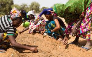 """In Africa piantano alberi per costruire una """"Grande Muraglia Verde"""" che aiuterà il pianeta"""