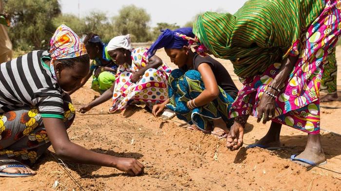 In Africa piantano alberi per costruire una