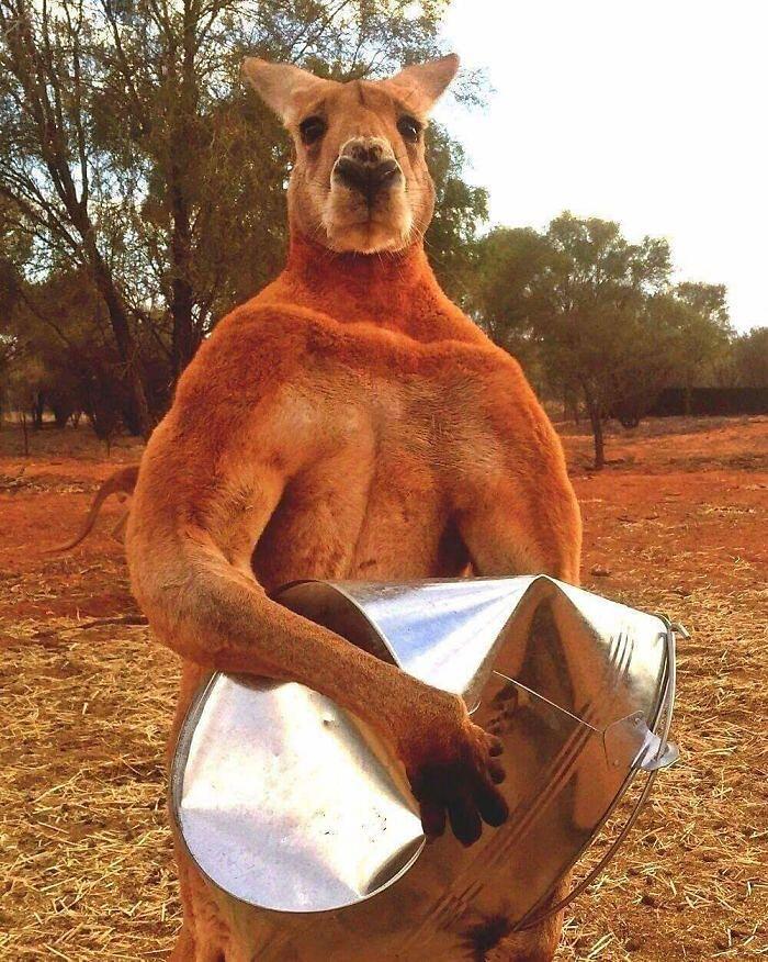 Foto divertenti animali inquietanti