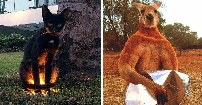 Presenze inquietanti: 44 animali che vi metteranno i brividi