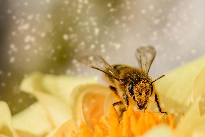 Le api sono state dichiarate gli esseri viventi più importanti del pianeta