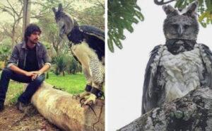 Questa aquila arpia è così grande che sembra una persona in costume